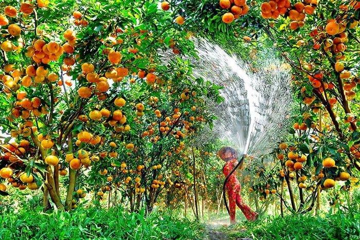 Top 5 miệt vườn trái cây nhất định bạn phải đến giải nhiệt mùa hè này