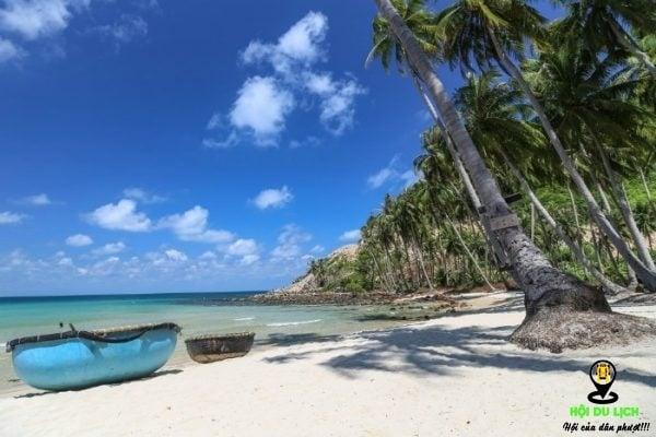 Hàng dừa xanh ngát tại Bãi Rạng - Mũi Né