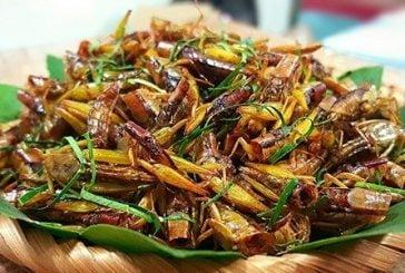 Top 7 món đặc sản côn trùng