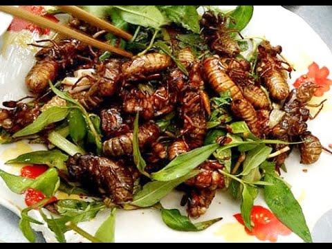 Ve sầu - món ăn độc lạ, thơm ngon.