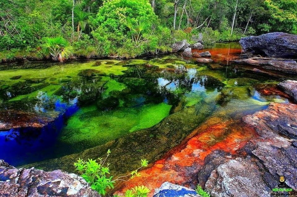 Cano Cristales dòng sông chảy xuống từ thiên đường