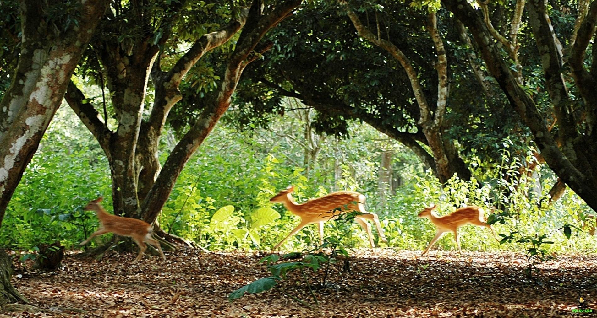 Review điểm đến du lịch Vườn quốc gia Cúc Phương