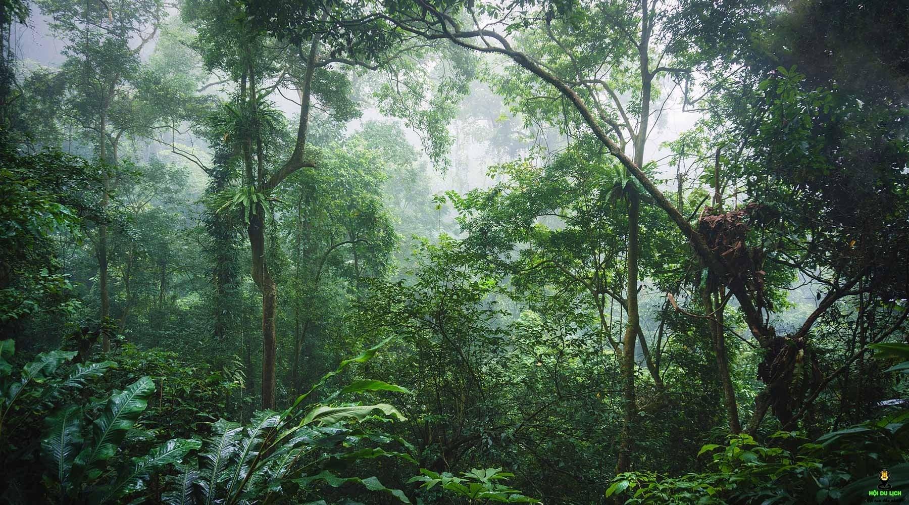 Hệ sinh thái đa dạng bậc nhất