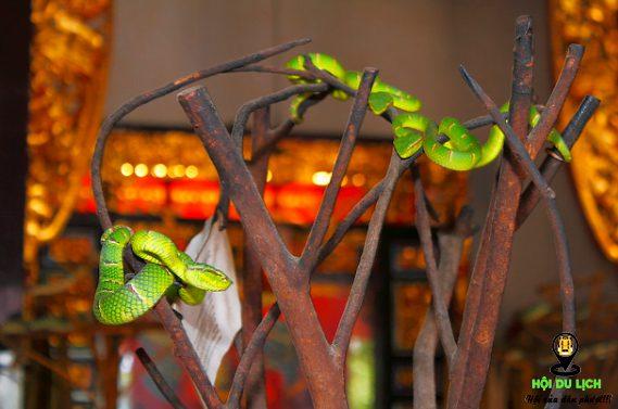 Những chú rắn ở đền Rắn đủ sắc màu