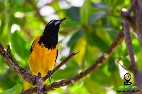 Curacao đảo quốc của những loài độc đáo
