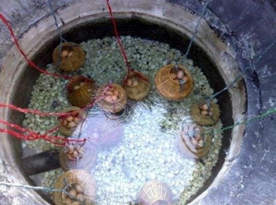 Luộc trứng ở suối nước nóng Bình Châu (ảnh sưu tầm)