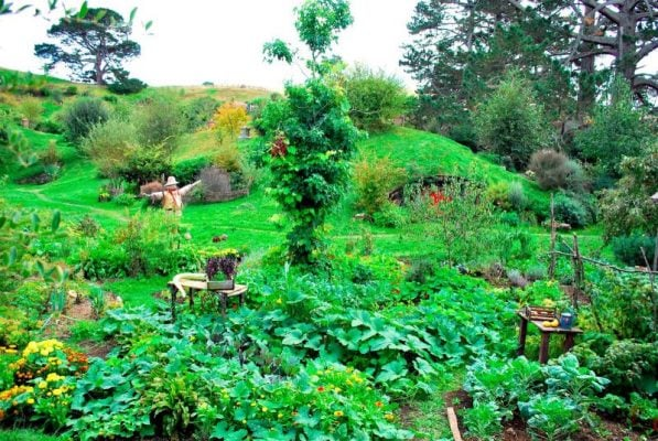 Ngôi làng Hobbiton đẹp như miền cổ tích(ảnh ST)