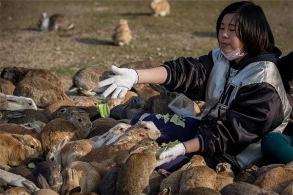 Khám phá đỏ Thỏ _ Nhật Bản (ảnh St)