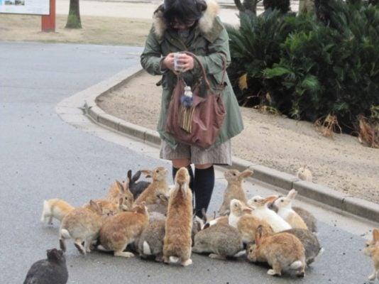 Bạn có thể cho thỏ ăn (ảnh St)