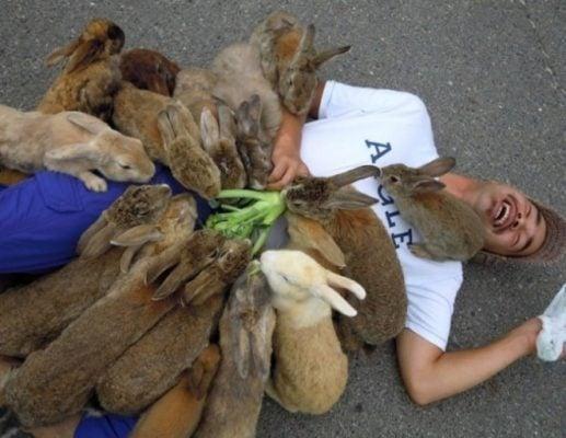 Vui đùa cùng những chú thỏ (ảnh St)