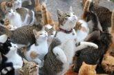 Đảo thỏ, đảo mèo – hòn đảo độc đáo có một không hai ở Nhật Bản