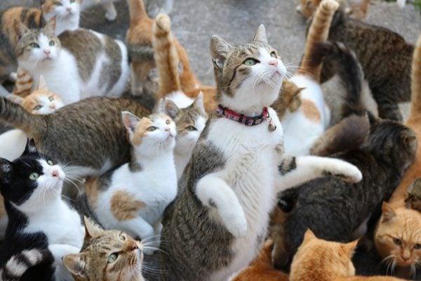 Những chú mèo thật ngộ nghĩnh (ảnh St )