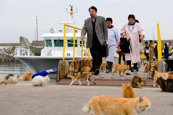 Những con mèo dạo chơi khi khách xuống phà (ảnh st)