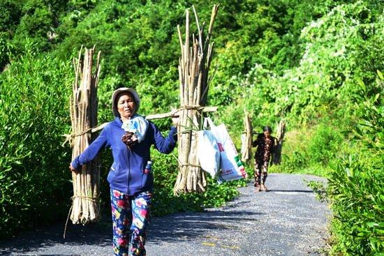 Gánh ngô đồng từ rừng về