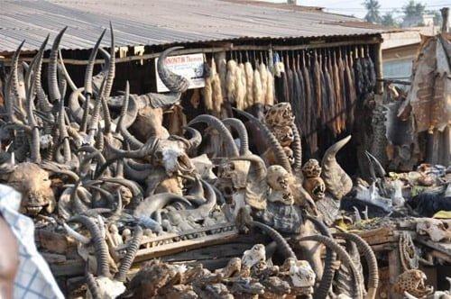 Bạn có thể tìm thấy mọi thứ của động vật ở Marche des Feticheurs
