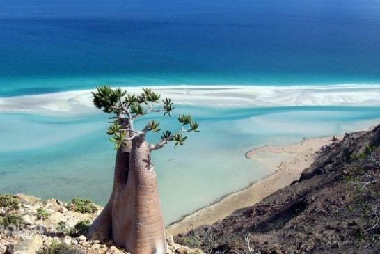 """Khám phá """"hòn đảo ngoài hành tinh"""" Socotra"""