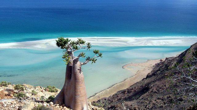 Socotra hoang vu và đầy mê hoặc