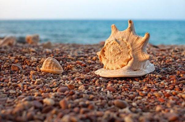 95% loài ốc ở Socotra không thể tìm thấy ở nơi khác