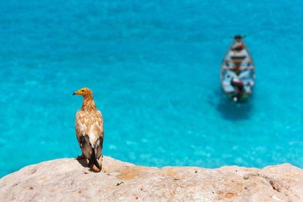 Nhiều loài chim đặc hữu (ảnh Sunsinger/Shutterstock)