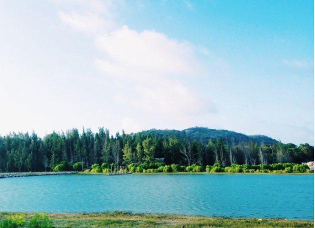 Hàng phi lao xung quanh Hồ Cốc(ảnh sưu tầm)