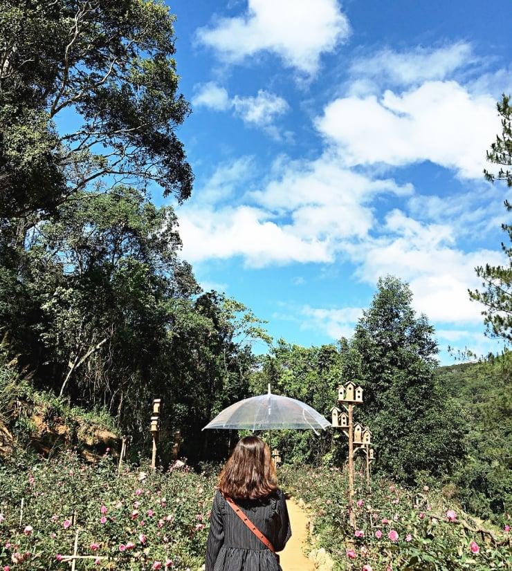 Chụp ảnh với cánh đồng hoa hồng trong Hoa Sơn Điền Trang Đà Lạt