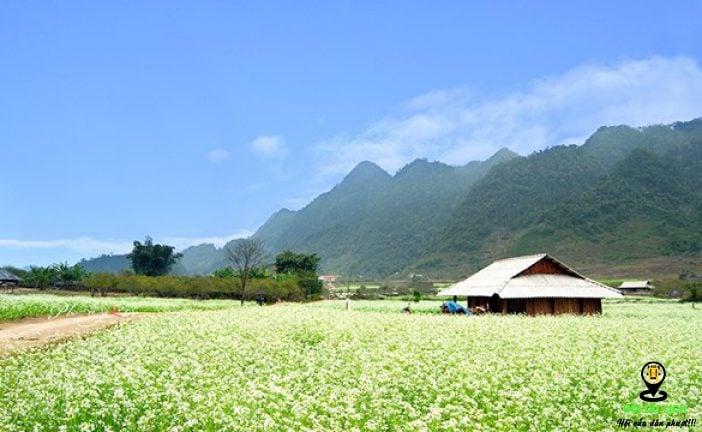 Top 3 Địa điểm du lịch Mộc Châu vô cùng hấp dẫn