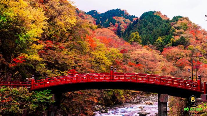 Bức tranh thu tuyệt đẹp được ngắm nhìn từ cây cầu gỗ Shinkyo - ảnh sưu tầm