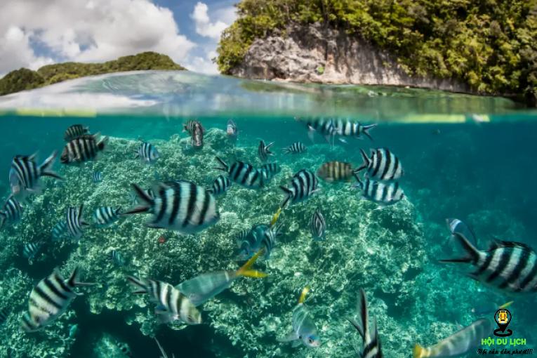 Chiêm ngưỡng vẻ đẹp các rạn san hô biển của quần đảo Penghu- ảnh sưu tầm