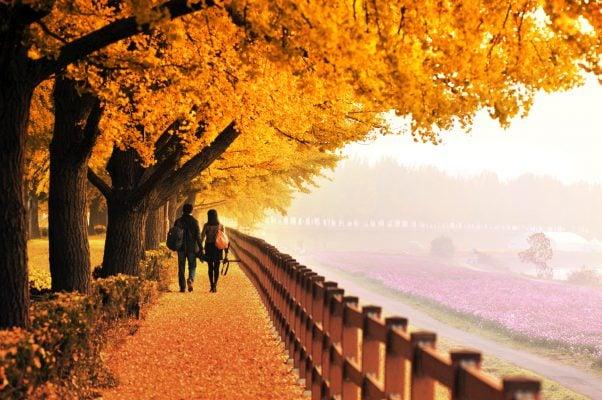 Lạc vào thiên đường mùa Thu tại Seoul