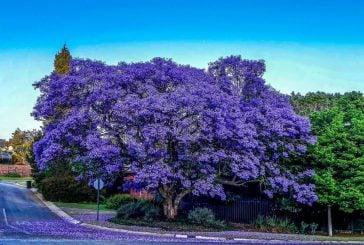 4 mùa du lịch Đà Lạt ngắm hoa đẹp lãng mạn