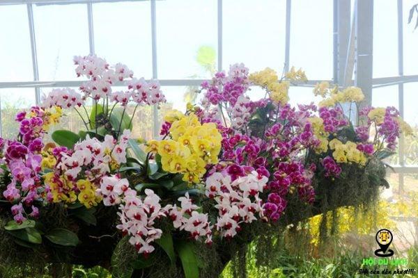 Khu vườn lan cực đẹp ở đồi vạn hoa- ảnh sưu tầm