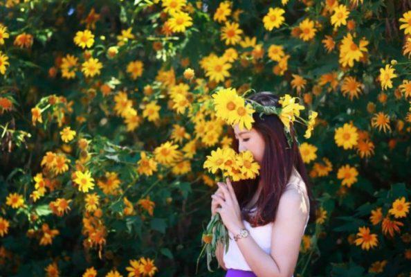 Hoa dã quỳ đẹp mê mẩn ở Đà Lạt- ảnh sưu tầm