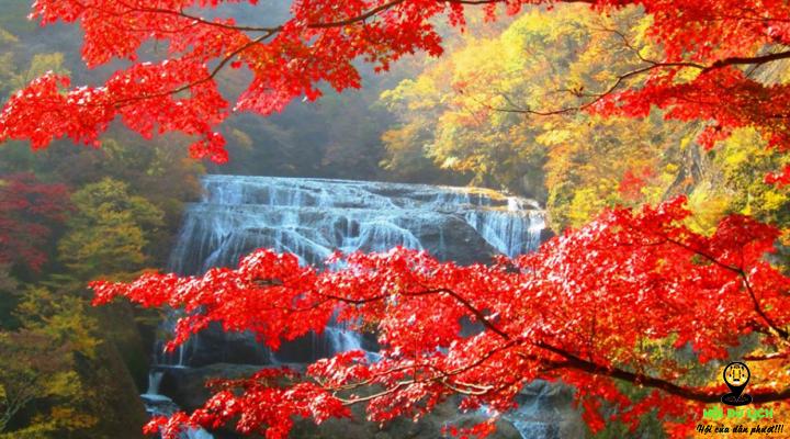 Mùa thu của Nhật Bản đẹp say đắm lòng người- ảnh sưu tầm