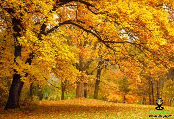 Mùa thu ở Trung Quốc đẹp mê hoặc lòng người- ảnh sưu tầm