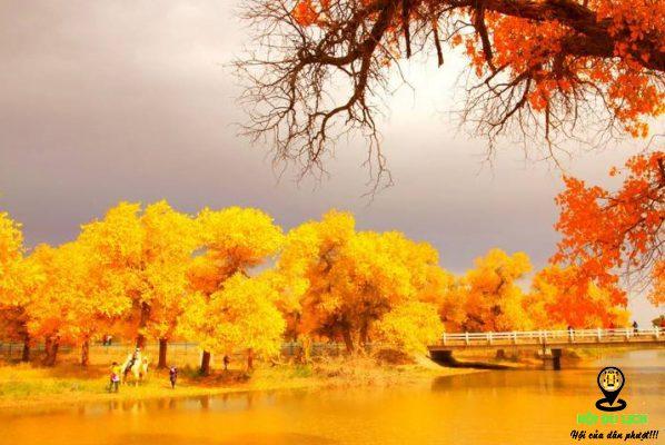 Mùa thu ở núi Vàng An Huy- ảnh sưu tầm