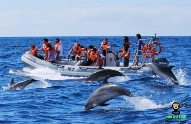Ngắm cá heo trình diễn siêu hấp dẫn trên đảo- ảnh sưu tầm