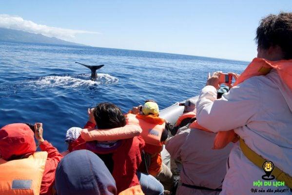 Ngắm cá voi trên đại dương ở quần đảo- ảnh sưu tầm
