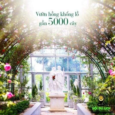 Vườn hồng ở đồi vạn hoa- Nha Trang- ảnh sưu tầm