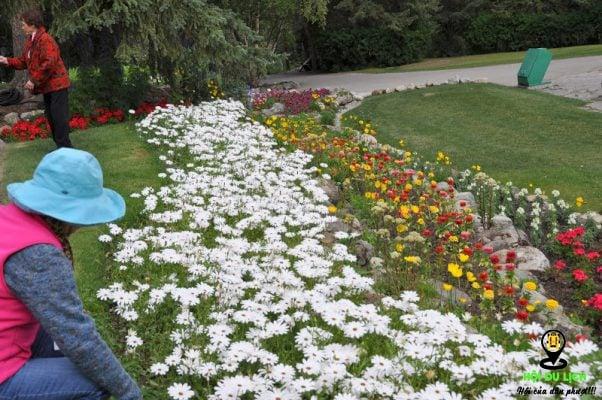 Vườn hoa Cascade ở làng Bannff- ảnh sưu tầm