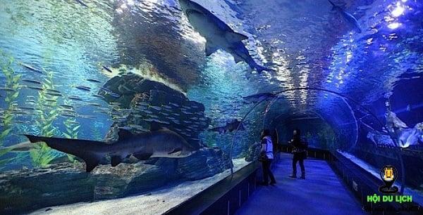 Thế giới đại dương Busan Aquarium