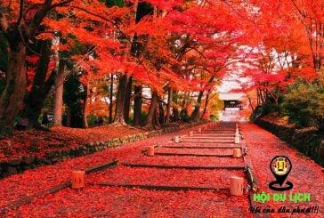 Những địa điểm du lịch nước ngoài mùa thu hấp dẫn