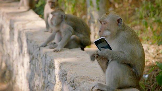 """Du lịch Bali và hàng loạt hiểm nguy rình rập du khách: Sóng """"tử thần"""", khỉ """"cướp giật"""" và đặc biệt là điều cuối cùng! - Ảnh 10."""