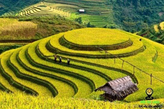Tổng hợp những địa điểm ngắm ruộng bậc thang Việt Nam mùa lúa chín