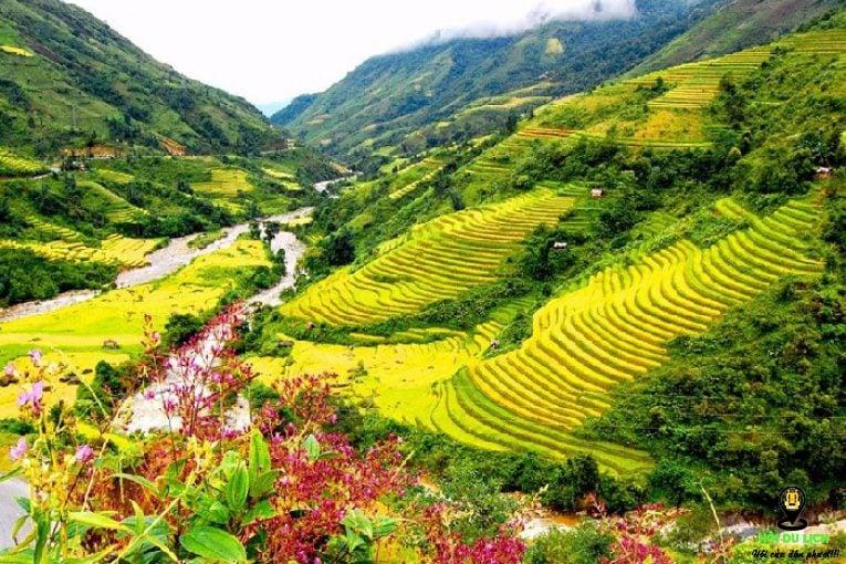 Thung lũng Mường Hoa nhuộm sắc vàng mùa lúa chín