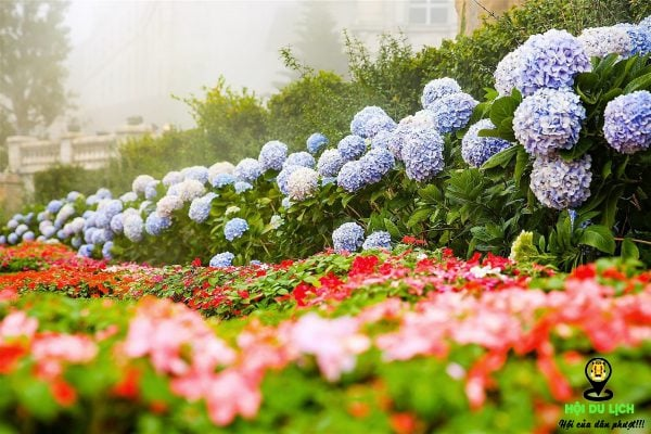 Một góc vườn hoa tình yêu Bà Nà