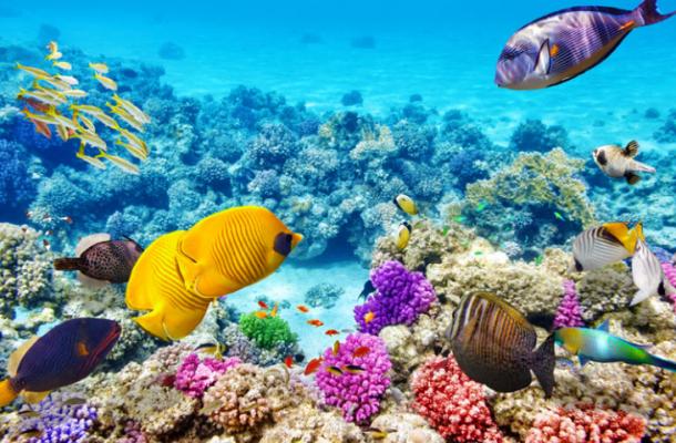 Đại dương với dạn san hô đủ sắc màu ở Maldives- ảnh sưu tầm
