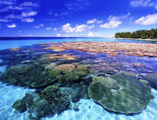 Đảo Koh Larn có những rạn san hô cực đẹp- ảnh sưu tầm