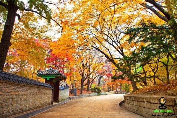 Sắc thu Hàn Quốc