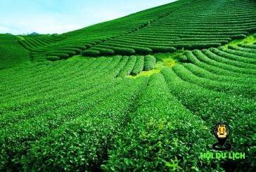 Những địa điểm không thể bỏ lỡ khi đi du lịch Mộc Châu