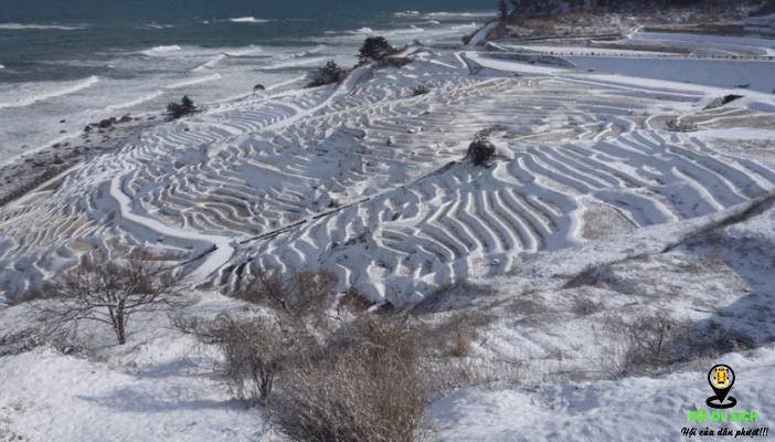 Các ruộng bậc thang chìm trong giấc ngủ mùa đông- ảnh sưu tầm
